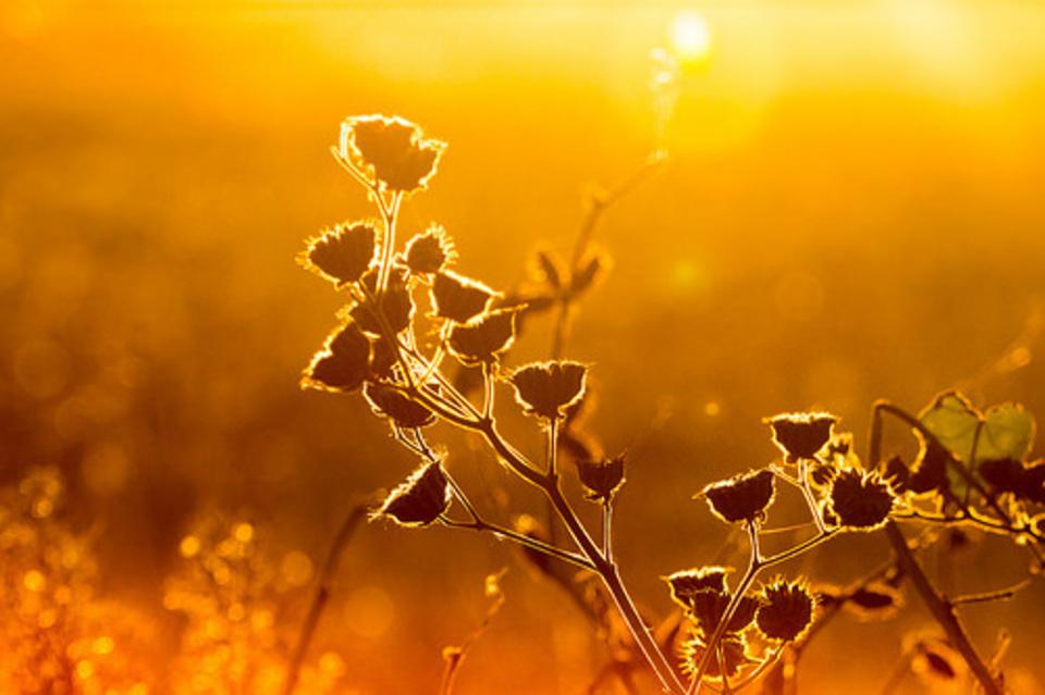 The Secret Golden Key of Leadership